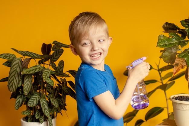 Chłopiec dba o rośliny w domu, opryskując roślinę czystą wodą z balonu i wycierając je gąbką.