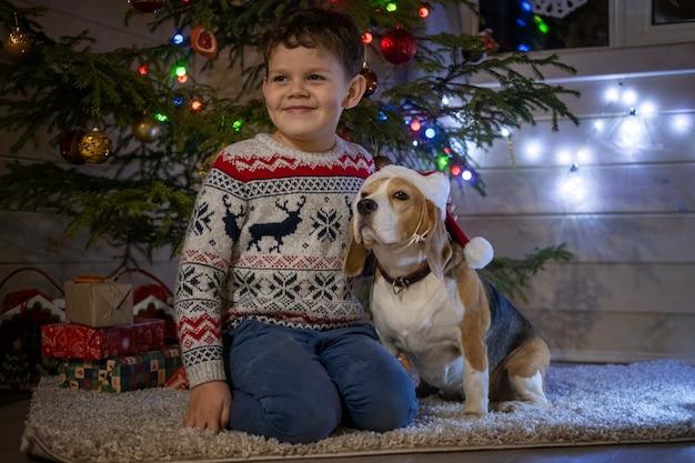 Chłopiec i pies beagle w czerwonej czapce w pobliżu choinki