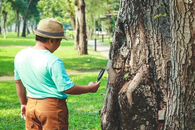 Chłopiec jest ciekawy. użyj szkła powiększającego, aby spojrzeć na drzewo. w godzinach szkolnych