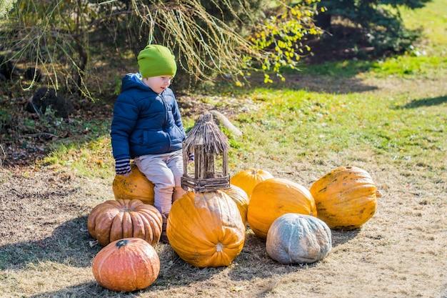 Chłopiec ma zabawę z baniami na dyniowej łatie na gospodarstwie rolnym