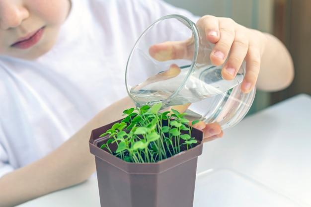 Chłopiec nawadnia młodej rośliny w garnku. w trosce o naturę. koncepcja święta ziemi i światowego dnia ochrony środowiska. uprawa warzyw w domu.