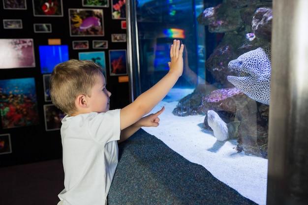 Chłopiec patrzeje rybim zbiornikiem