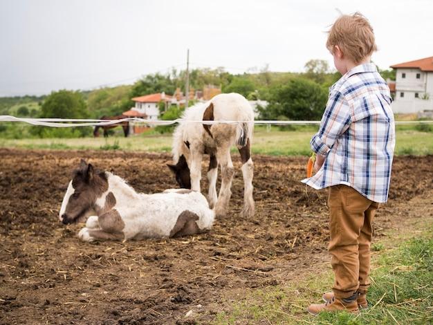 Chłopiec patrzeje zwierzęta
