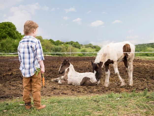 Chłopiec stoi obok zwierząt gospodarskich
