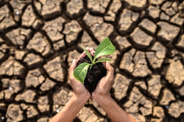 Chłopiec stoi, trzymając sadzonki na suchym lądzie w ocieplającym się świecie.