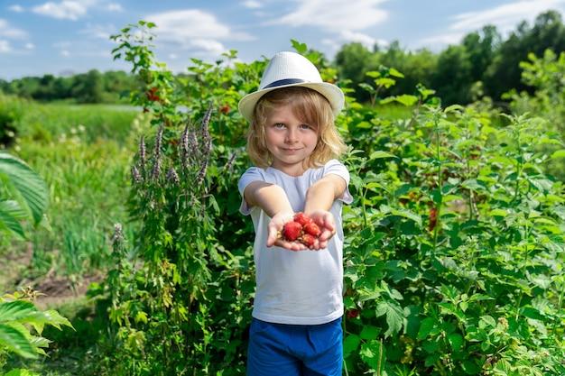 Chłopiec trzyma w rękach kilka dojrzałych truskawek