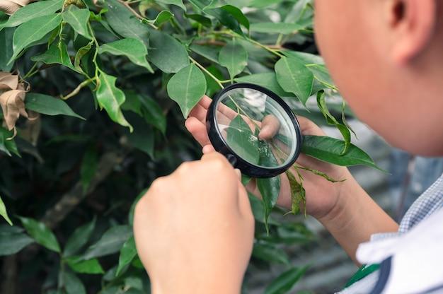 Chłopiec za pomocą lupy patrząc i ucząc się na zielonym liściem w klasie biologii poza salą lekcyjną