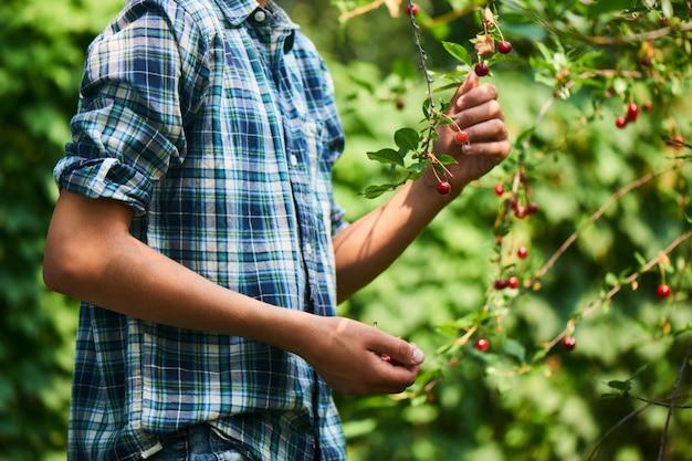 Chłopiec zbiera zbiory wiśni we wsi