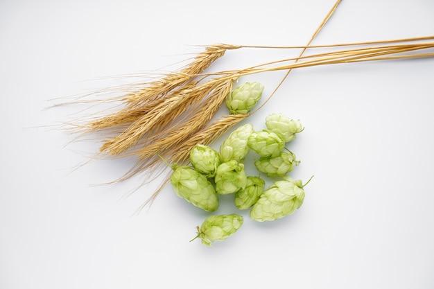 Chmiel i gałęzie pszenicy na białym tle na biały, widok z góry