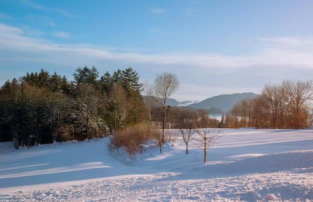 Chmurny dzień zimy krajobrazu las