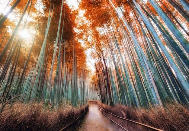 Chodnik w jesiennym bambusowym lesie zacienionym światłem słonecznym w arashiyama