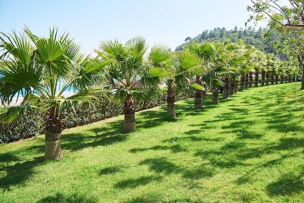 Chodnik w letnim parku z palmami. amara dolce vita luxury hotel. ośrodek wczasowy. tekirova-kemer. indyk