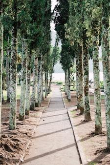 Chodnik w parku