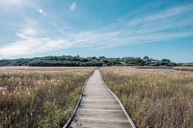 Chodnik w polu