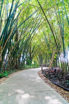 Chodnik z bambusem