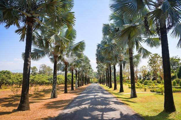 Chodnik z palmą w tropikalnym lecie. droga i dłoń zdobią ogród i zielony liść