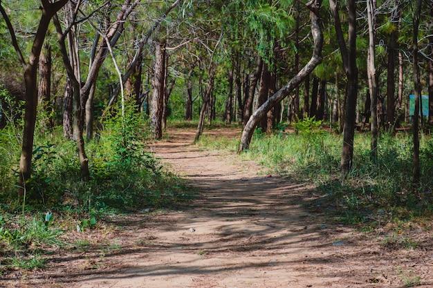 Chodzenie dobudów liści wędrówki po lesie kraju