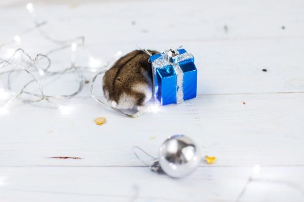 Chomik z bożonarodzeniową girlandą i obecnym pudełkiem na jasnoniebieskim drewnianym tle
