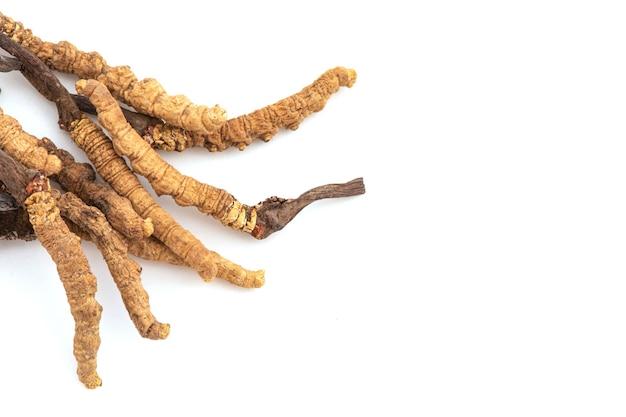 Chong cao lub cordyceps sinensis na białym tle. widok z góry, płasko świecki.