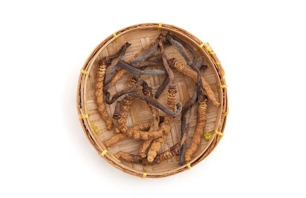 Chong cao lub cordyceps sinensis na białym tle z wycinek path.top view, płasko świeckich.