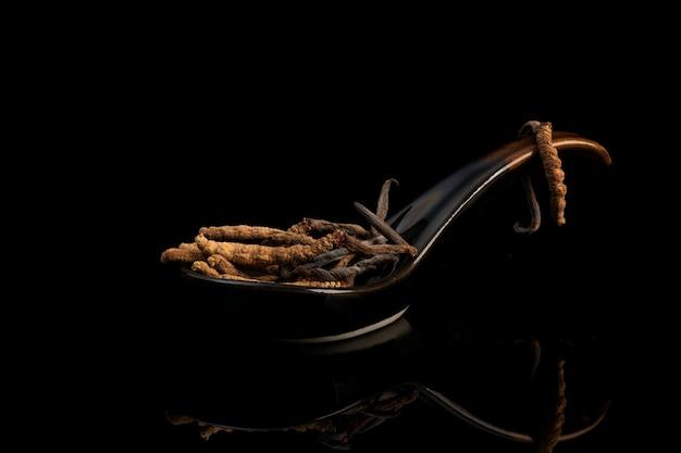 Chong cao lub cordyceps sinensis na czarnym tle