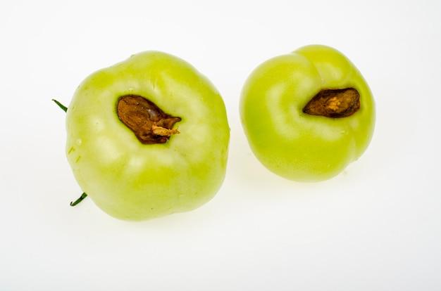 Choroby pomidorów, zgnilizna na owocach.