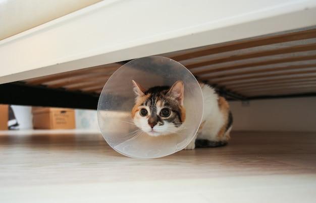 Chory kot z kołnierzem weterynaryjnym lub plastikowym stożkiem na głowie, aby chronić kota przed wylizaniem rany