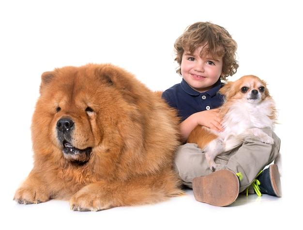Chow chow, chihuahua i mały chłopiec