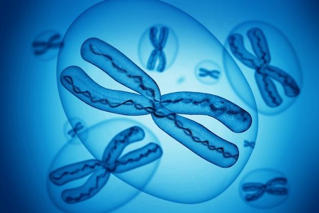 Chromosomy x.