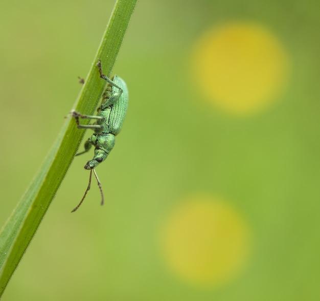 Chrząszcz na zielonym liściu