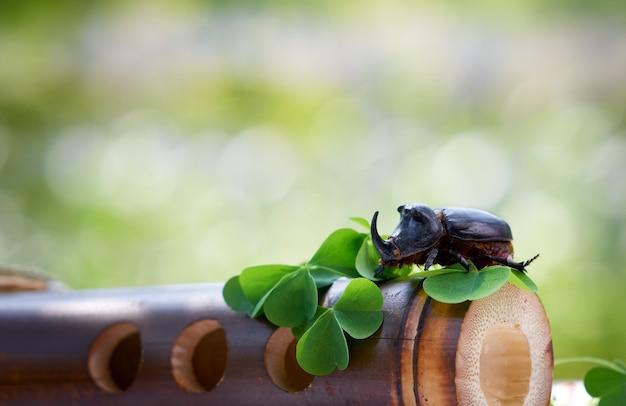 Chrząszcz nosorożca na kawałku drewna z liśćmi koniczyny