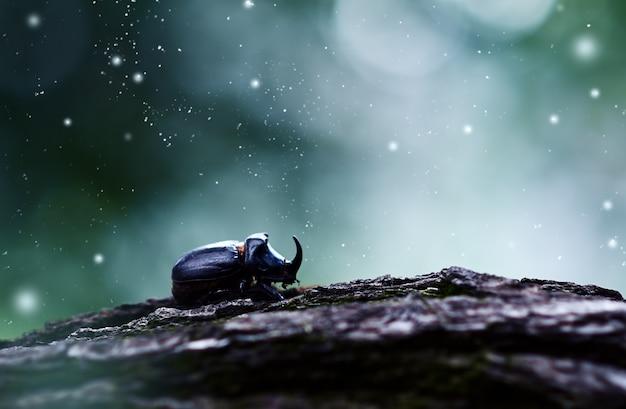 Chrząszcz nosorożec w promieniach księżyca. nocna atmosfera