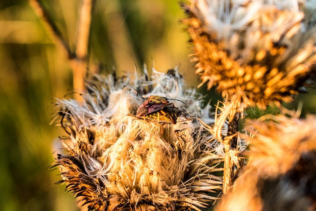 Chrząszcze i suszone kwiaty