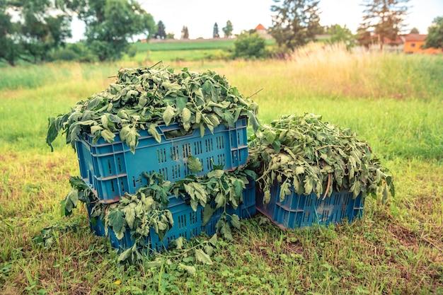 Chwasty w skrzyniach na polu w gospodarstwie.