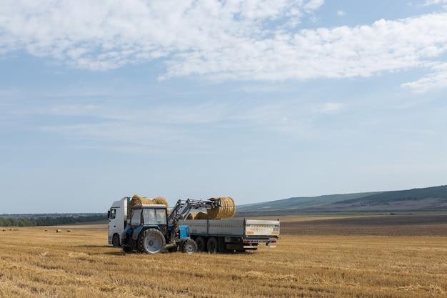 Ciągnik układa okrągłe bele słomy do przyczepy maszyny na skoszonym polu pszenicy.