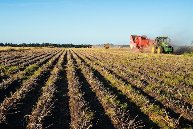 Ciągnik zbiera ziemniaki na polu. wizerunek branży rolniczej