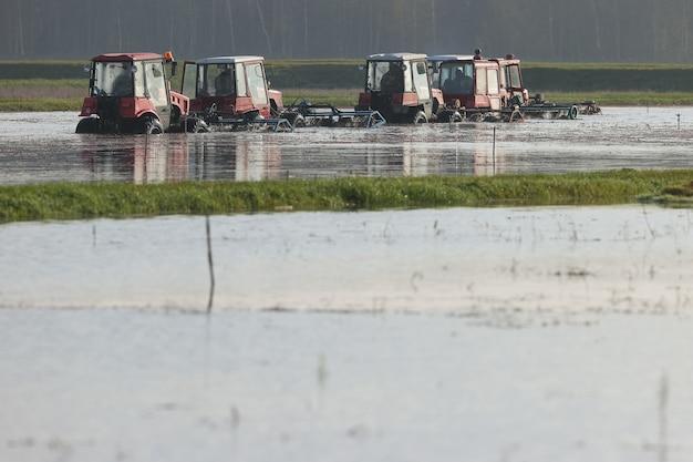 Ciągniki młóciły krzaki żurawiny podczas żniw na farmie
