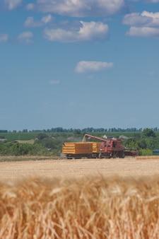 Ciągniki zbierają pszenicę na polu, letni krajobraz rolniczy