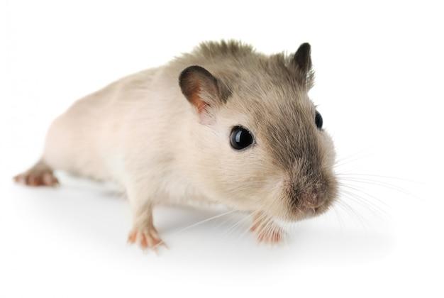 Ciekawa mysz z bliska