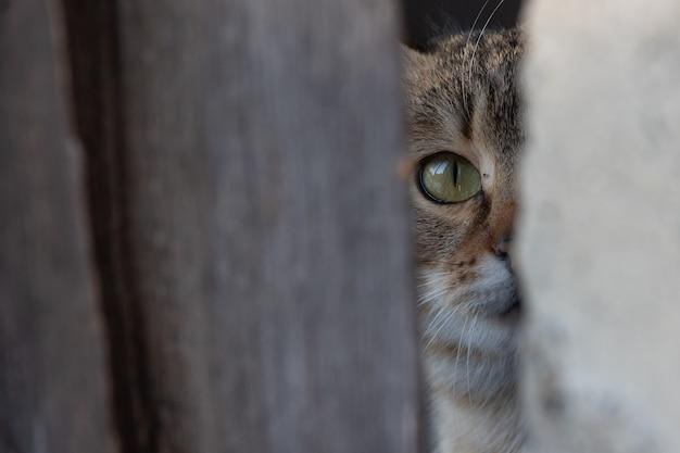 Ciekawski, przestraszony, wielobarwny młody kociak wygląda zza osłony widoczna jest tylko część twarzy selektywna ostrość.