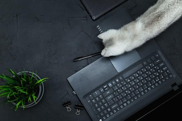 Ciekawy kot na stole biznesmena. biznes, praca zdalna, koncepcja samokształcenia. widok z góry, płaski układ, niski klucz.