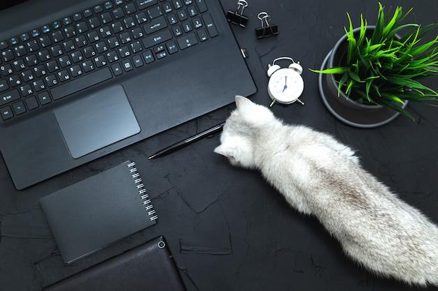 Ciekawy kot na stole biznesmena. biznes, praca zdalna, koncepcja samokształcenia. widok z góry, płaski układ.