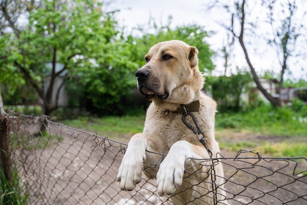 Ciekawy pies patrzy na ogrodzenie ogrodu