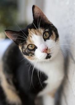 Ciekawy trójkolorowy kot