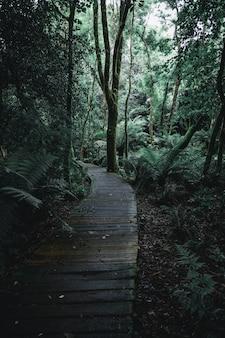 Ciemna sceneria leśnego szlaku z drewnianymi deskami