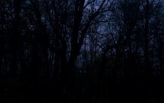 Ciemne drzewa leśne
