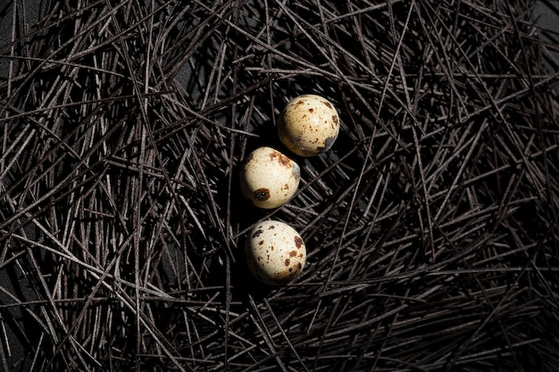 Ciemne gniazdo z jajkami przepiórczymi