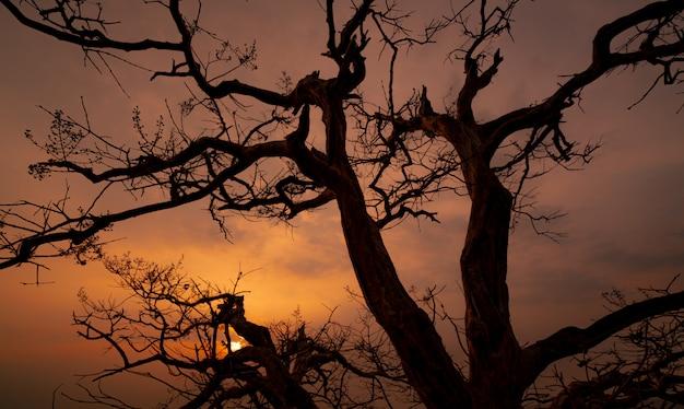 Ciemne niebo o zachodzie słońca z wzorem piękna gałęzi