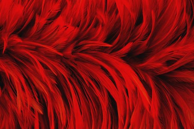 Ciemnoczerwone piórko wzór tekstury dla tła i dzieła sztuki projektowania.