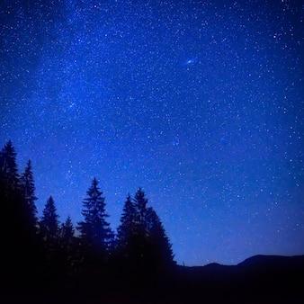 Ciemnoniebieskie nocne niebo nad tajemniczym lasem z sosnami